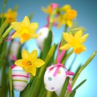 Narcisos de Pascua