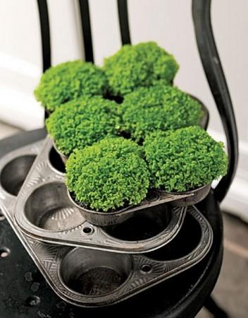 mini jardin con moldes de magdalenas