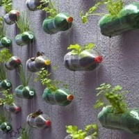 reciclar botellas de plastico 3