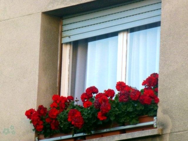 Balcón con flores - mini jardín