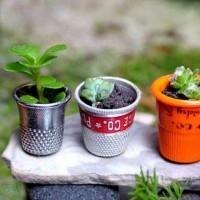Mini jardín